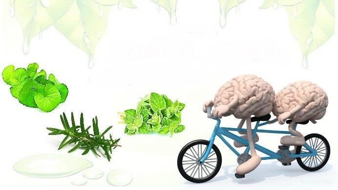 herbs for brain